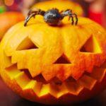 Le saviez-vous ? Spécial Halloween