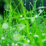 Rêves : rêver d'herbe