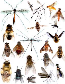 r ves r ver d 39 insectes claire thomas medium. Black Bedroom Furniture Sets. Home Design Ideas