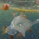 Découverte de 1500 nouvelles espèces marines dans les océans