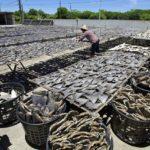 Planète : La disparition des requins