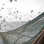 Notre planète : le scandale de la pêche en eaux profondes