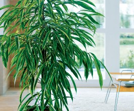 Tous sur les plantes