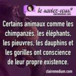 Le saviez-vous ?  les animaux et leurs consciences