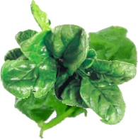 Recette : green smoothie