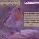 Le saviez-vous ? Les oiseaux