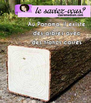 Le saviez-vous ? Il existe des arbres avec des troncs carrés