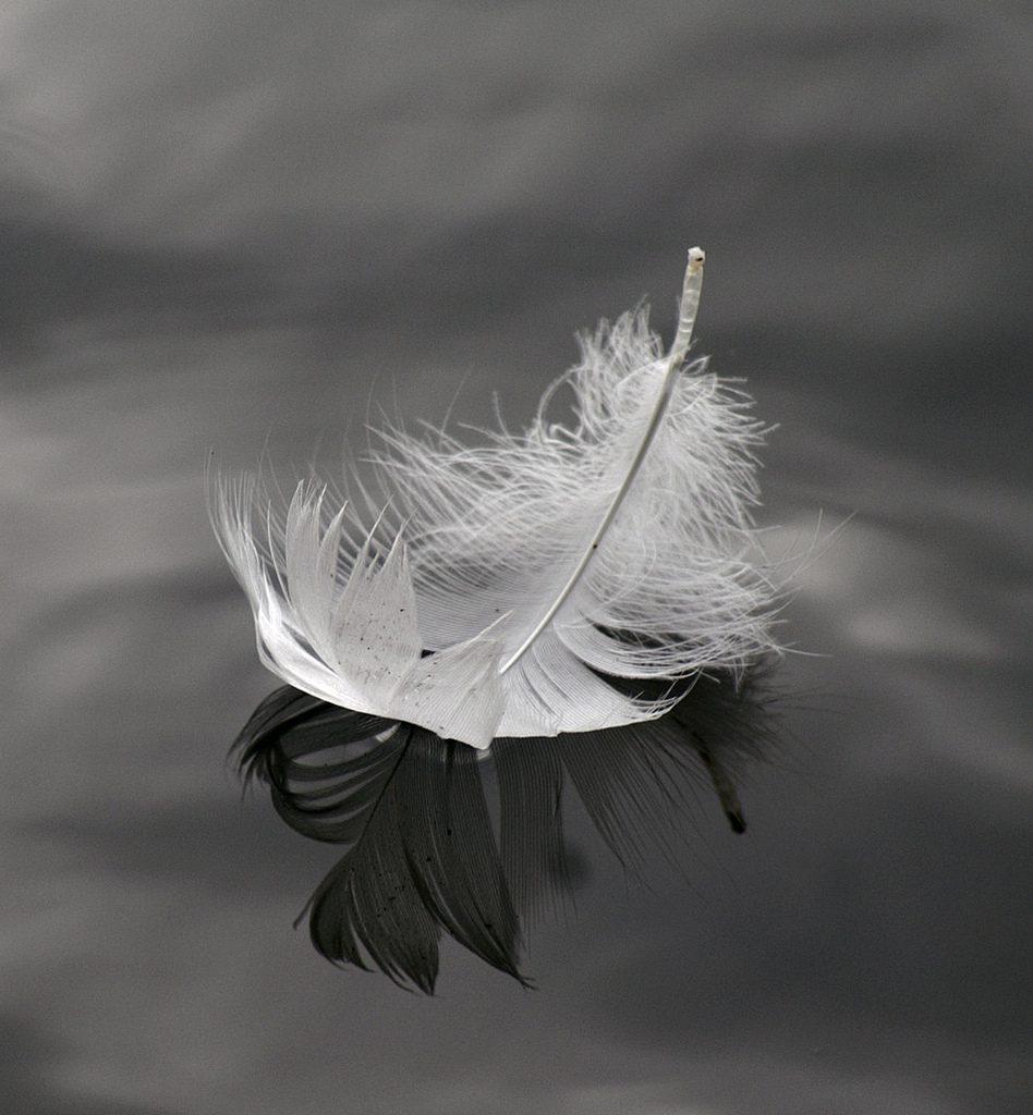 Rêve de plumes