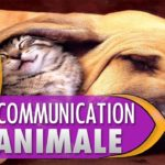 Communication animale