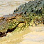 Rêver de crocodile