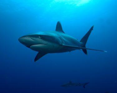 Rêver de requin