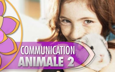 La communication animale 2 : vos questions