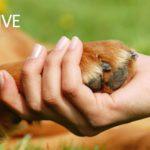 Prenons soin de nos animaux