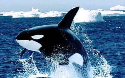 Rêver d'orques