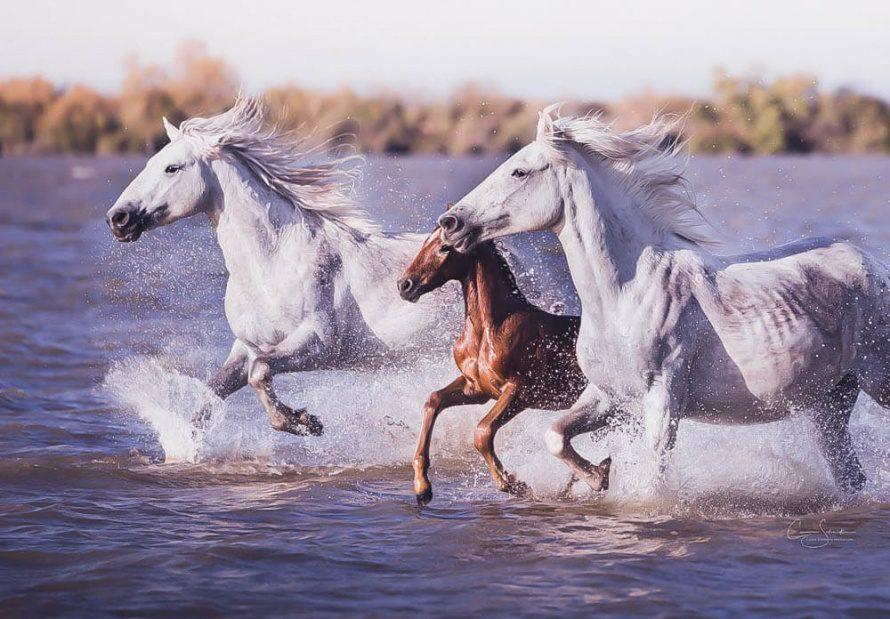 Animal-totem : le cheval